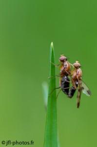 En suspend : mouches