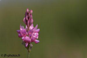 Fleur en plan large