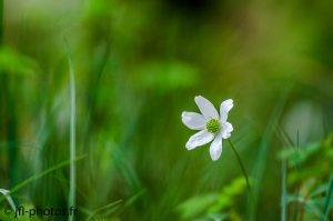 Fleur Plan large