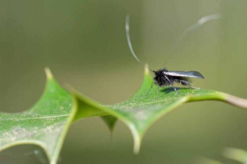 adele verdoyante macro